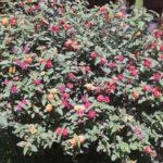 Unser Blumenstrauß zum Grundstück Kauf